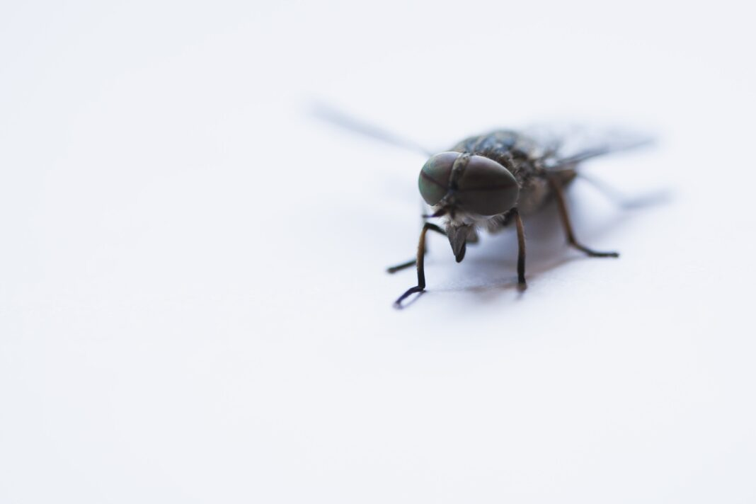 household pests and how each can adversely affect your health