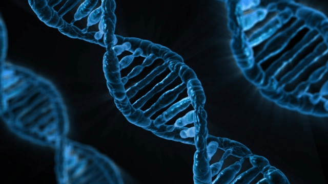 MTHFR Gene Mutation